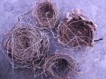 Empty Nests collected over the course of a year.