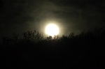 5/5/12 - The Flower Moon, The Hare Moon,