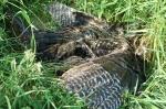 Dead Turkey.