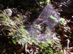 Not a very impressive picture of a spider web...