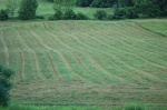 7/15/12.  Earliest the fields have ever been hayed.